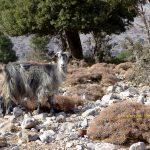 Νοτιοανατολική Κρήτη. Παναγία Εξακουστή, Κατω Σύμη, Μύρτος